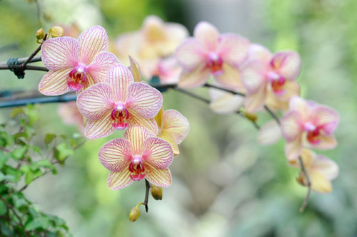 close-up shot of pink orchid