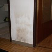 Wasserschaden sanieren von vdl dem wasserschadensanierer - Wasserschaden wand ...