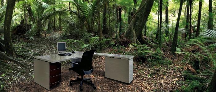 Urwald im Büro
